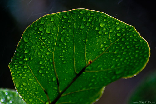 20080815_LeafWaterdrops3