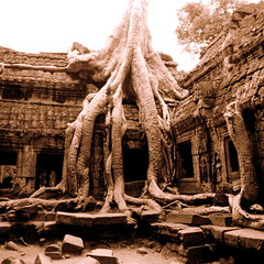 Magical Ta Phrom (... Arjun) Tags: blackandwhite bw 15fav sepia fairytale 1025fav 510fav wonderful square moving nikon perfect asia cambodge cambodia khmer magic surreal 100v10f unescoworldheritagesite special 2550fav 500v50f squareformat 50100fav mysterious d200 lovely charming exquisite dreamlike siemreap angkor toned paranormal 2008 magical breathtaking enchanted charmed touching delightful taphrom supernatural angkorthom cherished miraculous astonishing captivating enchanting kampuchea fairylike thrilling 18200mmf3556g bluelist 100200fav onephotoweeklycontest magicaltaphrom