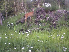 cam_data/photo070.jpg