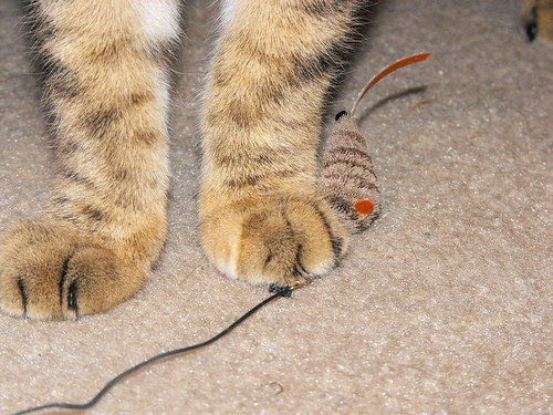 Nina Paws with Mousie