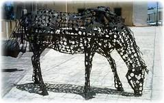 pastando sobre el asfalto (rioabajovoy) Tags: street horse art me caballo photo arte photos basilica colonial iglesia dibujo morro zona composicion zonacolonial higuey montecristi oceanoatlantico