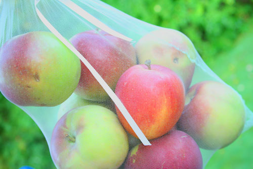Apples in a mesh bag