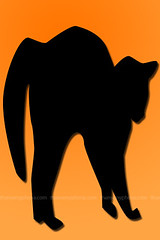 Black Cat Halloween (ThemeMyPhone) Tags: wallpaper black halloween cat backgrounds 320x480 iphonewallpapers iphone3g thememyphone ipodtouchwallpaper
