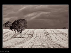 An Australian Landscape (sachman75) Tags: sunset blackandwhite bw tree lines clouds farm wheat australia nsw fields gundagai riverina humehighway coolac interestingness341 70200f28isusm i500 40d auselite hesaysshesays