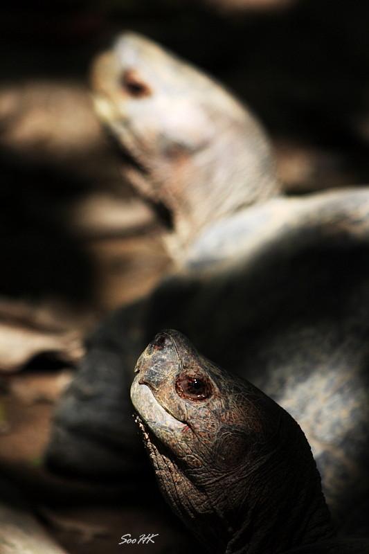 Turtle @ National Zoo, KL, Malaysia