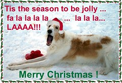 christmas dog holiday snow sing russian sighthound borzoi wolfhound barsoi barzoi