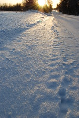 Winter walk around Selkie, North Karelia, Finland (Dave_S.) Tags: road winter sun snow sunshine suomi finland nikon path nordic finnish scandinavia selkie karelia talvi scandinavian sunnyday d60 northkarelia finnishwinter pohjoiskarelia