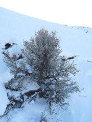 The desert brush was awesome in the snow.