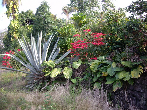 wild cactus and poinsettias