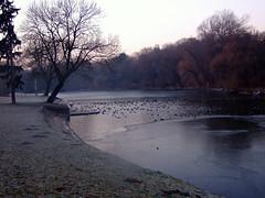 Szczecin, Poland (agrolka) Tags: park trees winter ice nature water landscapes lakes poland natura szczecin icebound