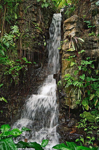 Missouri Botanical Garden (Shaw's Garden), in Saint Louis, Missouri, USA - waterfall in Climatron Greenhouse