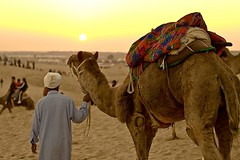 Watching Sunset (rajatbansal) Tags: sunset india desert camel jaisalmer 5photosaday samdesert