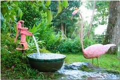 Eden Nature Park - Pink Garden (JoLiz) Tags: park city pink flowers mountain nature garden interestingness flickr flamingo philippines resort explore eden suki waterpump davao top500 davaocity explored toril mayumis davaodelsur joliz deepwellwater exploresuki