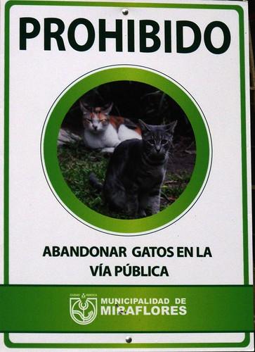 Prohibido abandonar gatos en la via publica