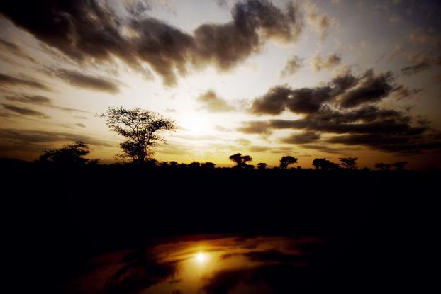 Safari 19