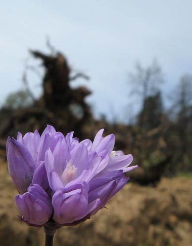 A few blooms