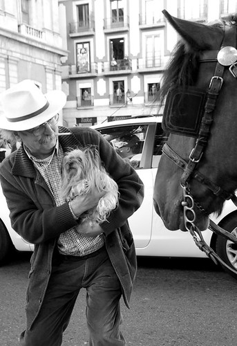 hond vindt paard spannend