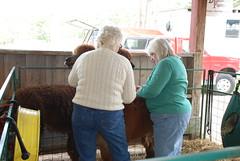 Mom meets the alpaca