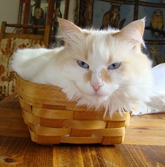 Powder in a basket