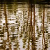 Royal Palace of Venaria (cienne45) Tags: carlonatale cienne45 italy turin royalpalaceofvenaria royalpalace venaria reflections grandepeschiera aplusphoto explore artedellafoto friends superphotoex aplusphotoex aphotoex exploreexset explore1336 square natale