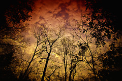 The greater danger for most of us is not that our aim is too high and we miss it, but that it is too low and we reach it (kktp_) Tags: trees sky clouds thailand nikon branches silhouettes chaiyaphum d80 tokinaatx124afprodx1224mmf4 unbokeh