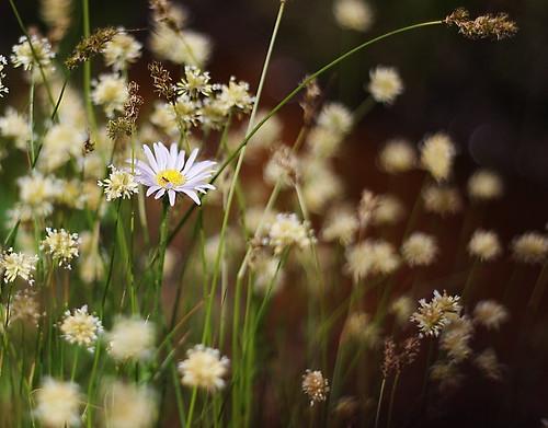 Как фотографировать цветы! Советы от фотографов Lion Arts Раменское!