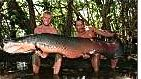 Ecuador-big-fish