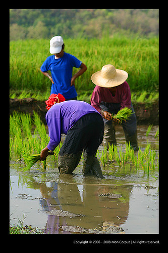 Re: Biag Ti Manalon - Portraits From The Rice Fields