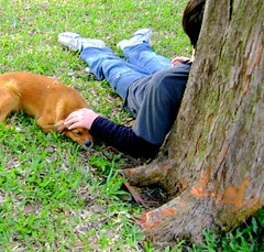 [EXPLORE] (Giik) Tags: cachorro árvore tranquilidade menino