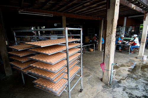 Drying sticky rice to be made into khao taen, rice cakes topped with palm sugar, Khun Manee, Lampang, Thailand