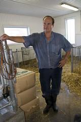 naissance veau-108 (Mmo) Tags: famille canada saint paul stpaul qubec lait naissance ferme vache vie foin beaupr joliette veau