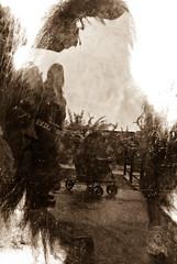 Orangutan and Reflections (James Edward Creamer) Tags: glass reflections orangutan riograndezoo oldsoul monochromia nikon1855mm