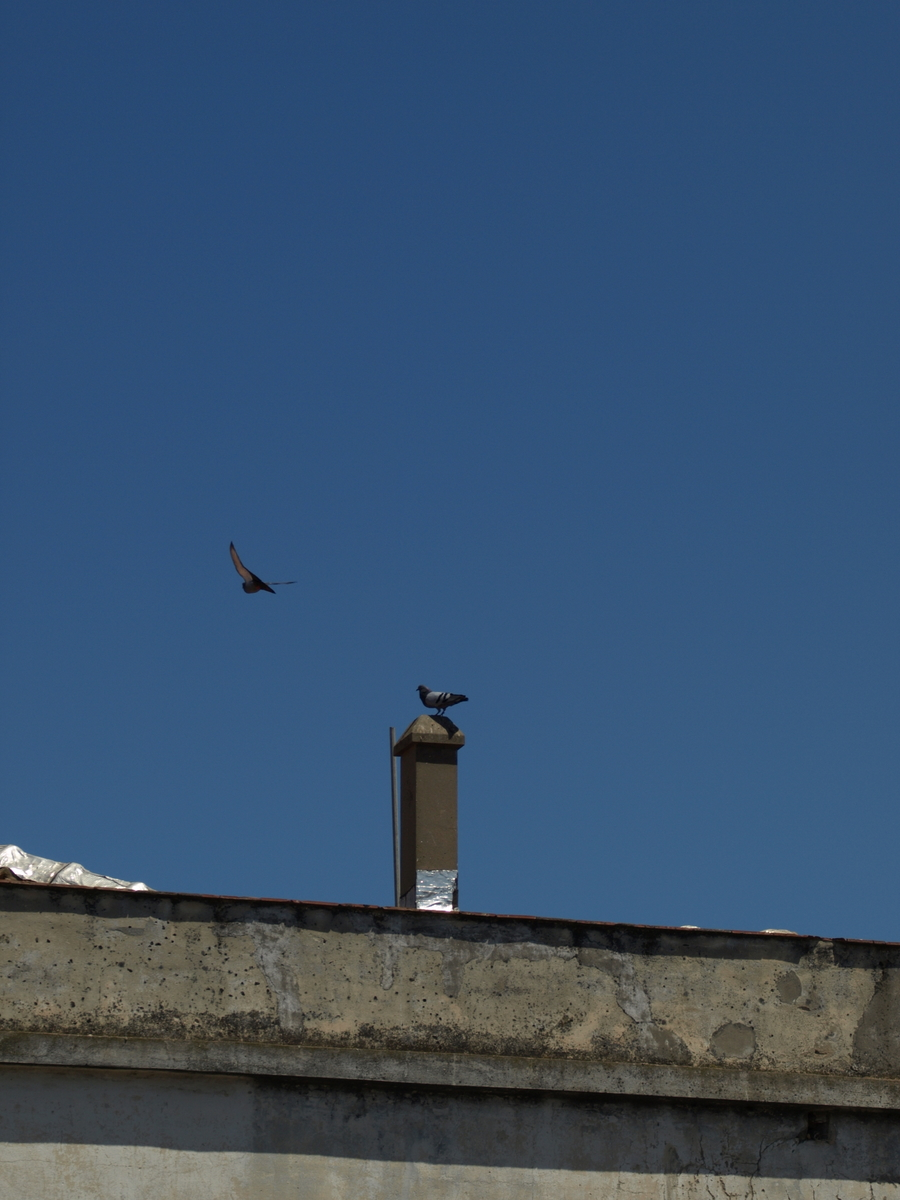 Pigeons with blue sky II