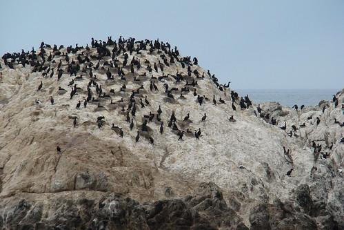 17 Miles-12 黑色一點一點的是鳥