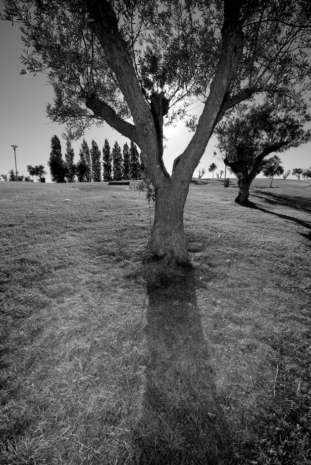 Árvore iluminada por um flash sb600