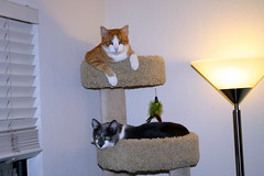 New Cat Tree