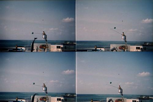 海豚跳起來打球