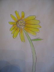 Sunflowers 005