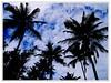 Essa sombra.. (Jessica Aquino) Tags: praia beach natureza bluesky bahia coqueiro nordeste trancoso céuazul throughyoureyestoours panoramafotograficonovideo