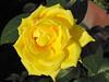 coolpix 8800( f/6.3 ISO 50 1/125sec. 24.0mm) (claudiopink80) Tags: venice london museo fiori colori fontana londra monumenti spiaggia animali crociera acquaalta insetti cascata seastorm panorami scozia mareggiata cornovaglia acquaaltaavenezia