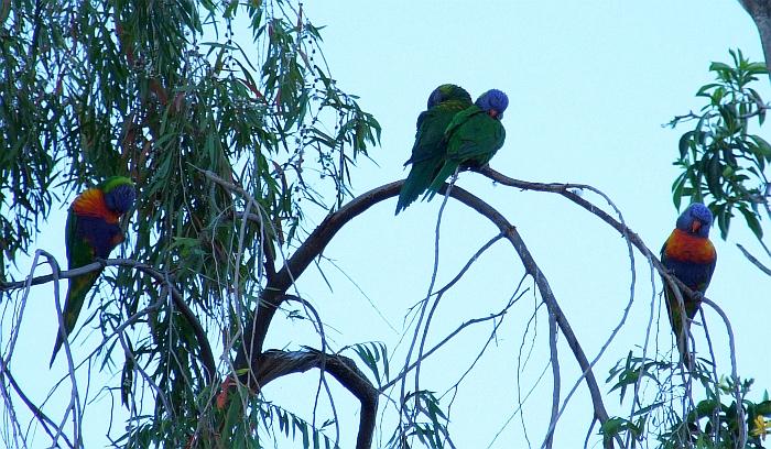 plotting parrots