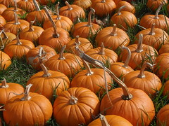 smaller pumpkins