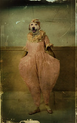 Sweet Boudi Rose (Martine Roch) Tags: pink dog love animal labrador clown dream surreal dancer photomontage boudi digitalcollage ttv petitechose martineroch leschick psycheopteryx