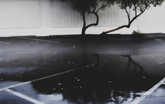 the library (eliza graumlich (grael)) Tags: blue trees brown white reflection green wet water leaves rain wall puddle weird library branches parking lot cropped trunks asphalt picnik damp bendy lean personless