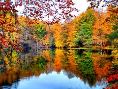 yedigller in autumn (NURAY YUZBASI) Tags: autumn reflection fall sony reflexions bolu yansma krmz sonbahar yedigller renkler turuncu sonydscw30 mywinners abigfave anawesomeshot theunforgettablepictures colourartaward goldstaraward alemdagqualityonlyclub flickrlovers 100commentgroup