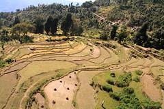 View from the Top (sherylchan) Tags: nepal scenery farmland pokhara sarangkot