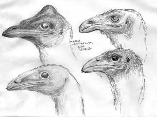 ornithomimid - moa heads