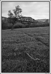 El árbol caído (SergioTudela) Tags: wood sky blackandwhite bw mountain tree blancoynegro field grass madera bn cielo árbol trunk campo prairie montaña tronco blackdiamond hierba d80 theunforgettablepictures