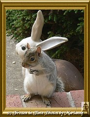 FBI: P2180629 MOM- WHY ARE MY EARS SO SMALL?????? (Frozen in Time photos by Marianne AWAY OFF/ON) Tags: nature squirrels jackie wildlife critters furryfriday soe animalplanet outofthisworld fbi animalbabies backyardcritters sciuruscarolinensis blueribbonwinner easterngreysquirrel otw photosmiles youlookinatme friends~ justonelook framedphotos supershot favorites35 flickrnature mywinners abigfave nationalgeographicwannabes shieldofexcellence anawesomeshot impressedbeauty impressedbyyourbeauty funnysquirrels wildlifeoftheworld faithfulflickrfriends lmaoanimalphotoaward squirrelspool rodentsrule favoritesbyinterestingness heartawards theunforgettablepictures photostosmileabout platinumheartaward naturesbabies ilovesquirrels adorablecritters superamazingshots goldstaraward yourpreferredpicture bestofsquirrels arealgem ilovemypics wildaboutwildlife ~ilovenature~ 100arzorlessthan500crazycomments photosmilesphotosthatmakeyousmile natureunlimitedpublicgroupforever photowatermarkframes photosofqualitytosmileabout jediphotographer goldenaardvarkaward clickthecamera naturegreenstar stocktheparkwildlifeimagesonly dragondaggerphoto dragonflyawards mswebstersoffsprings suchcuteness~ nationalgeographicareyougoodeno wildanimalsmakemehappyanimalsinthewildsavetheearth tieregibtesberall 590views nationalgeographiswannabes passionoftheheart naturesanctuary