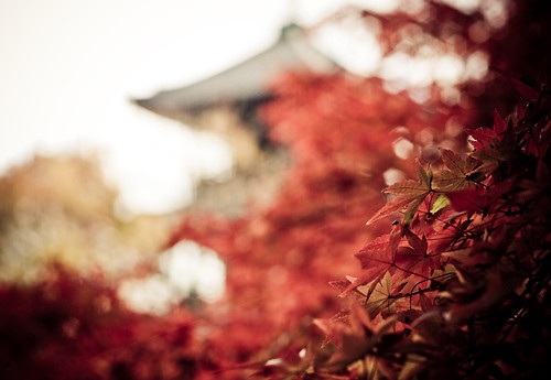 Autumn in Japan #2